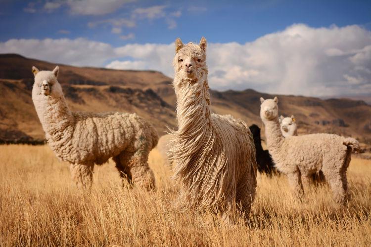 chili andes tourisme