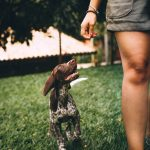 Mutuelle santé pour votre chien