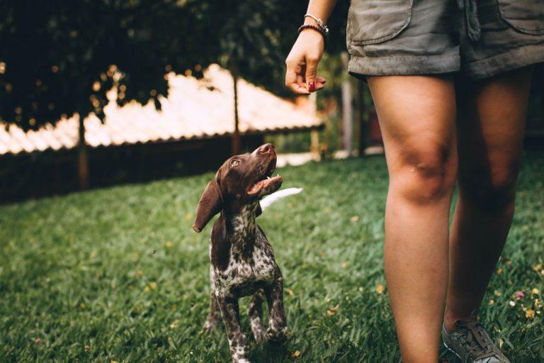 Read more about the article Mutuelle santé pour votre chien